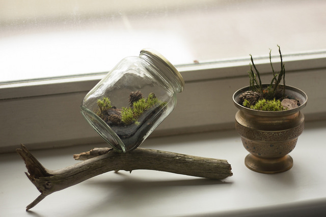 Unwind by making a terrarium and watching plants grow
