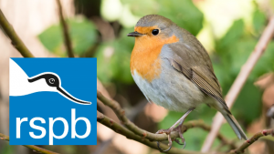 Bird Watching Weekend with RSPB