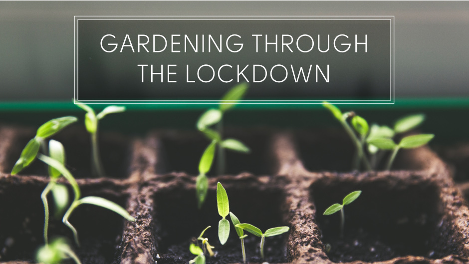 Gardening Through The Lockdown